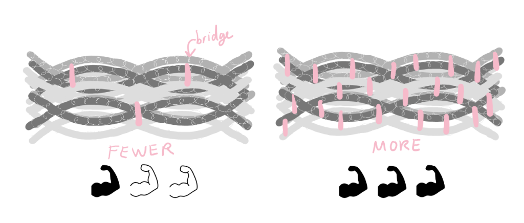 Cartoon of two keratin filaments: one with a few bridges, indicated as somewhat strong, and one one with many bridges, indicated as very strong.