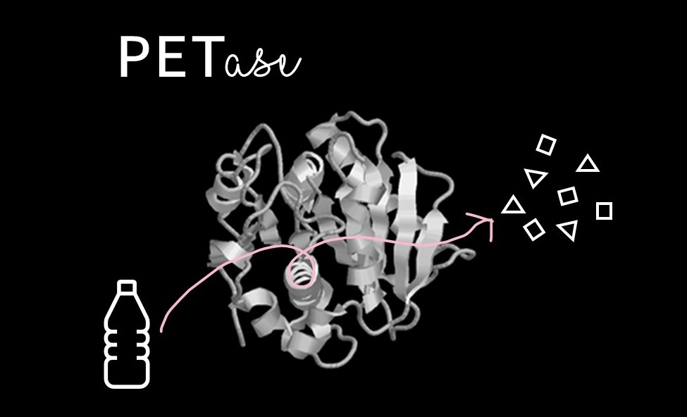 Three dimensional structure model of PETase. A cartoon plastic water bottle is shown going in, and several small shapes are coming out.